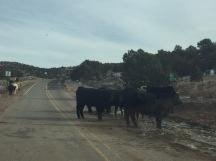 Las vacas estaban paradas en plena carretera, así que tuvimos que rodearlas.